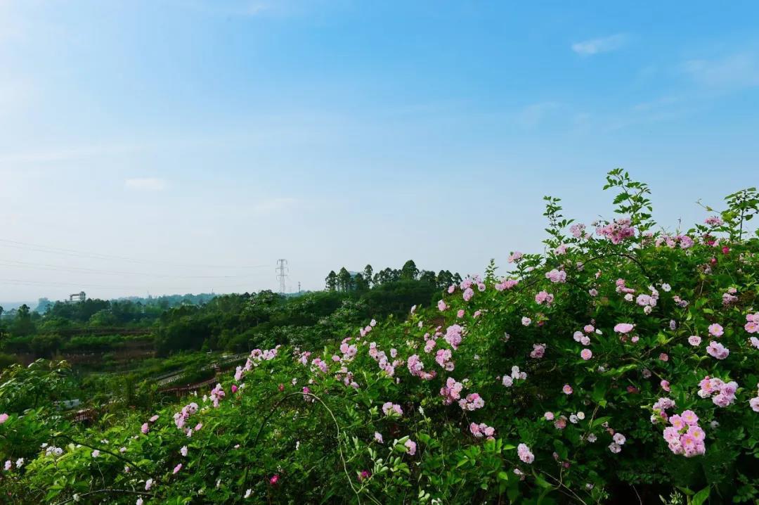 嘉州绿心公园.jpg